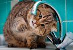 Котик и смеситель